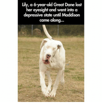 This warms my heart (Swipe for more): lily, a 6-year-old Great Dane lost  her eyesight and went into a  depressive state until Maddison  came along  ... This warms my heart (Swipe for more)