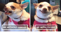 Memes, Coffee, and 🤖: LILY LU  ME WITHOUT COFFEE  ME WITH COFFEE