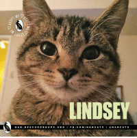 Please SHARE for Lindsey. nar.rescuegroups.org  Lindsey is spayed, UTD on vaccines and tested negative for FIV/FeLV. Approx. DOB is August 2016. Everyone's heard about a dog who followed a boy home, but what about a kitten who followed a rescue volunteer in the park? I was just a little baby, living life in the great outdoors, when I decided that I'd rather have a home and a family than be a free-range kitten! I popped out of the grass, right in the path of a volunteer out for a walk. I showed off by rolling on my back, chasing bugs in the field and wrapping myself around her legs. She scooped me up and we walked for a mile to her car, when I saw something that I just had to investigate and I flew out of her arms and into the dark. After looking for hours, the volunteer returned the next day, without any real hope of finding me in the 3000 acre park. But, as the passed the same spot where I had disappeared the night before, I popped right out of the grass again! Aren't I smart? Since then, I've been in foster care where I've been declared a healthy, happy little girl! I absolutely love to play! Wand toys, the ball-in-the-track, jingle balls and crinkle balls...I love them all! I spend much of my time playing, then I curl up with my foster mom for purrs and snuggles. But then it's back to playing! At night I sleep in bed with my foster mom...until it's time to get up and play again! Due to how active I am, I would love to be adopted with another kitten, or to a home with an active young cat. My foster sisters are kind of old, and they get worn out when I chase them! Do you think you can keep up with me?: LINDSEY  N A R  RE S CU E GROUP S O R G  I F B. COM  IN A CA TS  I N A RCA T S Please SHARE for Lindsey. nar.rescuegroups.org  Lindsey is spayed, UTD on vaccines and tested negative for FIV/FeLV. Approx. DOB is August 2016. Everyone's heard about a dog who followed a boy home, but what about a kitten who followed a rescue volunteer in the park? I was just a little ba