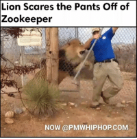 Memes, Scare, and Lion: Lion Scares the Pants Off of  Zookeeper  NOW (a PMWHIPHOPCOM I'm dying laughing 😂😂 - MORE AT PMWHIPHOP.COM LINK IN BIO