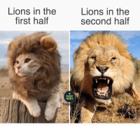 Too late tho 😳 rugby reds lions superrugby: Lions in the  first haltf  Lions in the  second half  RUGBY  MEMES Too late tho 😳 rugby reds lions superrugby