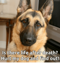Life, Memes, and Death: lis  K9 Instinct  s there life after death?  Hurt my dogand find out <3