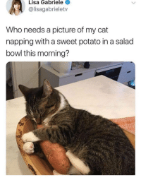 Potato, A Picture, and Bowl: Lisa Gabriele  @lisagabrieletv  Who needs a picture of my cat  napping with a sweet potato in a salad  bowl this morning? Everyone, probably