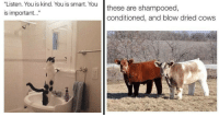 "18 Animal Memes  Pics Thatll Turn Your Day Around: ""Listen.  You  is  kind.  You is smart. Youthese are shampooed,  is important...""  conditioned, and blow dried cows 18 Animal Memes  Pics Thatll Turn Your Day Around"
