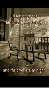 crickets: Listening to the  birds in the mornings  and the crickets at night