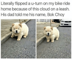 Bok Choy: Literally flipped a u-turn on my bike ride  home because of this cloud on a leash  His dad told me his name, Bok Choy Bok Choy