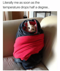 Funny, Soon..., and Florida: Literally me as soon as the  temperature drops half a degree I live in Florida ffs this shouldn't be happening 😅😩 girlsthinkimfunnytwitter itskindacoldoutside