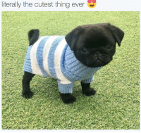 Thing, Cutest, and Literally: literally the cutest thing ever