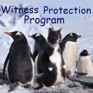 Literally the witness protection program: Literally the witness protection program