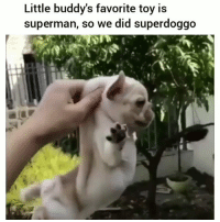 This is funny af 😂💀: Little buddy's favorite toy is  superman, so we did superdoggo This is funny af 😂💀