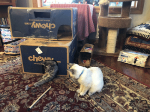 Took a few days, but they're digging the new cat fort.: little Christmas,  toalan  where pet lovers shop  chewy.co  4399  1-80 0-6  SCrVicocp  OGIFT IT  AFORWARD  1WITH PEPS-  Scon. match, gift.  cheune  cans  where p  pepsi  12t  SONR  1069-4023 Took a few days, but they're digging the new cat fort.