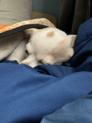 Little doggy taking a nap: Little doggy taking a nap