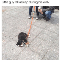 Memes, 🤖, and You Deserve It: Little guy fell asleep during his walk Rest up little guy, you deserved it. 😍 @dogsbeingbasic