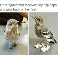 """Funny, Back, and Feet: Little injured bird receives tiny """"flip flops""""  and gets back on her feet."""