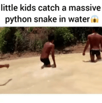 These kids are madd!!! 😱😱😱 @King_of_banter_ snake crazy lmao funny insta gram python insane lmfao: little kids catch a massive  python snake in water . These kids are madd!!! 😱😱😱 @King_of_banter_ snake crazy lmao funny insta gram python insane lmfao