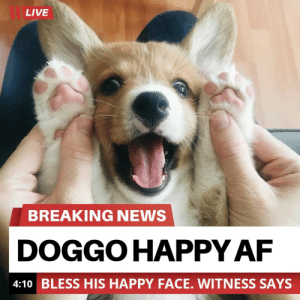 Breaking news: LIVE  BREAKING NEWS  DOGGO HAPPY AF  4:10 BLESS HIS HAPPY FACE. WITNESS SAYS Breaking news