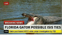 gator: LIVE  BREAKING NEWS  FLORIDA GATOR POSSIBLE ISIS TIES  Gator purchased AR15 while under investigation by FBI  17:01