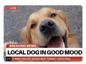 "some good news: LIVE  BREAKING NEWS  LOCAL DOG IN GOOD MOOD  | 2:14 ""I WAS CALLED GOOD BOY TODAY"" SAYS DOG some good news"