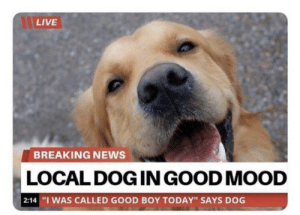 """https://t.co/TGsTbB7GMT: LIVE  BREAKING NEWS  LOCAL DOG IN GOOD MOOD   2:14 """"I WAS CALLED GOOD BOY TODAY"""" SAYS DOG https://t.co/TGsTbB7GMT"""