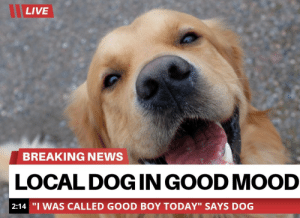 """Finally some good fucking news: LIVE  BREAKING NEWS  LOCAL DOGINGOOD MOOD  2:14 """"I WAS CALLED GOOD BOY TODAY"""" SAYS DOG Finally some good fucking news"""