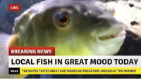 Mood, News, and Breaking News: LIVE  BREAKING NEWS  LOCAL FISH IN GREAT MOOD TODAY  19:41  THE WATER TASTES GREAT AND THERES NO PREDATORS AROUND AT THE MOMENT The news everyone has been waiting for