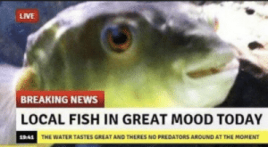 finally some good fucking news: LIVE  BREAKING NEWS  LOCAL FISH IN GREAT MOOD TODAY  19:41 THE WATER TASTES GREAT AND THERES NO PREDATORS AROUND AT THE MOMENT finally some good fucking news