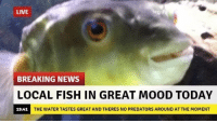 i wish i could relate: LIVE  BREAKING NEWS  LOCAL FISH IN GREAT MOOD TODAY  THE WATER TASTES GREAT AND THERES NO PREDATORS AROUND ATTHE MOMENT  19:41 i wish i could relate