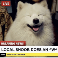 Memes, News, and Breaking News: LIVE  BREAKING NEWS  LOCAL SHOOB DOES AN AWA  23:45  HOW HE DO THAT FACE https://t.co/KgtETMJCPH