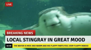 blessedimagesblog:  Blessed Stingray: LIVE  BREAKING NEWS  LOCAL STINGRAY IN GREAT MOOD  18:30 THE WATER IS NICE AND WARM AND HIS FLAPPY PARTS FEEL VERY FLAPPY INDEED blessedimagesblog:  Blessed Stingray