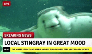 Mood, News, and Breaking News: LIVE  BREAKING NEWS  LOCAL STINGRAY IN GREAT MOOD  THE WATER IS NICE AND WARM AND HIS FLAPPY PARTS FEEL VERY FLAPPY INDEE Flappy flappy!