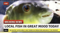 Mood, News, and Breaking News: LIVE  BREAKING NEWS  OCAL FISH IN GREAT MOOD TODAY  19-41  THE WATER TASTES GREAT AND THERES NO PREDATORS AROUND AT THE MOMENT Yay, Im so glad!