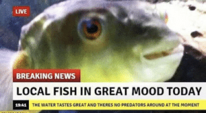 Mood, News, and Breaking News: LIVE  BREAKING NEWS  OCAL FISH IN GREAT MOOD TODAY  19.44 THE WATER TASTES CREATAND  THE WATER TASTES GREAT AND THERES NO PREDATORS AROUND AT THE MOMENT