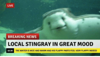 "Mood, News, and Breaking News: LIVE  BREAKING NEWS  OCAL STINGRAY IN GREAT MOOD  18:30  THE WATER IS NICE AND WARM AND HIS FLAPPY PARTS FEEL VERY FLAPPY INDEED <p>Important news via /r/wholesomememes <a href=""http://ift.tt/2DyhOKs"">http://ift.tt/2DyhOKs</a></p>"