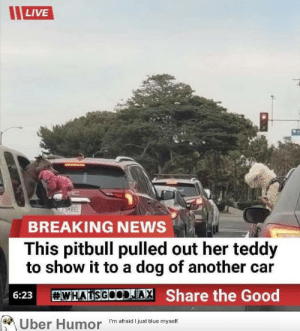 failnation:  These two: LIVE  BREAKING NEWS  This pitbull pulled out her teddy  to show it to a dog of another car  WHATSGOODAX Share the Good  6:23  Uber Humor  I'm afraid I just blue myself. failnation:  These two