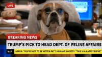"""BREAKING: LIVE  BREAKING NEWS  TRUMP'S PICK TO HEAD DEPT. OF FELINE AFFAIRS  ASPCA: """"YOU'VE GOT TO BE KITTEN ME"""" IHUMANE SOCIETY: """"THIS IS A CATASTROPHE""""  9:17 BREAKING"""