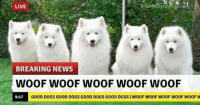 <p>the only news we wanna see.</p>: LIVE  BREAKING NEWS  WOOF WOOF WOOF WOOF WOOF  9:47  GOOD DOGS GOOD DOGS GOOD DOGS GOOD DOGS | WOOF WOOF WOOF WOOF WOOF W <p>the only news we wanna see.</p>