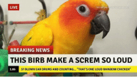 """Louding: LIVE  breakvoutownnews.com  BREAKING NEWS  THIS BIRB MAKE A SCREM SO LOUD  1:06  37 BLOWN EAR DRUMS AND COUNTING... """"THAT'S ONE LOUD RAINBOW CHICKEN"""""""