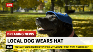 """Head, News, and Wow: LIVE  breakyourownnews.com  BREAKING NEWS  LOCAL DOG WEARS HAT  11-20  """"HE'S JUST WEARING IT! ON TOP OF HIS LITTLE HEAD! WOW! WHAT A GOOD BOY! """""""