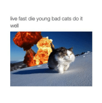 Bad, Cats, and England: live fast die young bad cats do it  well ok so this page is run by two guys (phil and jed) and we have made a 'spams' page where we post about what we are doing etc. and one of us if from England and the other is from Cali so yeah enjoy follow it @pjspams @pjspams 😅❤️