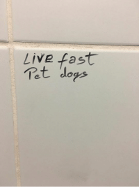 The words of the prophets are written on bathroom walls in Bucharest.: Live fast  Tet dogs The words of the prophets are written on bathroom walls in Bucharest.