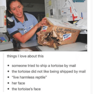 "Love, Live, and Mail: LIVE HARNLESS  PEPTILE  things I love about this  e someone tried to ship a tortoise by mail  . ""ive harmless reptile""  the tortoise did not like being shipped by mail  her face  the tortoise's face Shell pupper makes an escape"