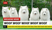 Good Dogs: LIVE  hes.com  BREAKING NEWS  WOOF WOOF WOOF WOOF WOOF  9:47  GOOD DOGS GOOD DOGS GOOD DOGS GOOD DOGS WOOF WOOF WOOF WOOF WOOF W