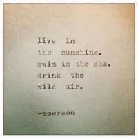 Live, Wild, and Emerson: live in  the sunshine.  swim in the sea  drink the  wild air.  -emerson