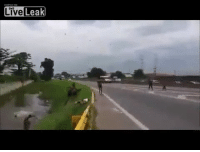 Live Leak Let's run across highway, jump in pond, WCGW?