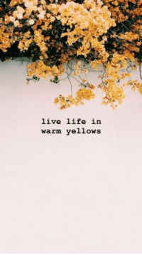 Life, Live, and Warm: live life in  warm yellows