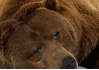 LIVE LOOK IN at the Chicago Bears https://t.co/HmL9bjYB9l: LIVE LOOK IN at the Chicago Bears https://t.co/HmL9bjYB9l