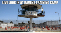 Baltimore Ravens, Football, and Nfl: LIVE LOOK IN ATRAVENSTRAINING CAMP  RAVENS Baltimore Ravens Training Camp