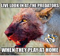 10 game home playoff win streak for Smashville. I don't see it ending tonight. But I've been wrong before...: LIVE LOOKIN AT THE PREDATORS  @nhl ref logic  WHEN THEY PLAY AT HOME 10 game home playoff win streak for Smashville. I don't see it ending tonight. But I've been wrong before...