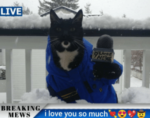Love, News, and I Love You: LIVE  Lves  INEXS  BREAKING  MEWS  i love you so much kitty bringing the news!