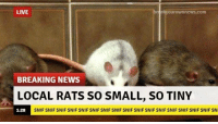 rat: LIVE  uroWnneWS.COm  BREAKING NEWS  LOCAL RATS SO SMALL, SO TINY  SNIF SNIF SNIF SNIF SNIF SNIF SNIF SNIF SNIF SNIF SNIF SNIF SNIF SNIF SNIF SNIF SNI  1:28